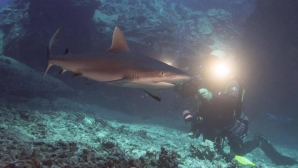 Underwater Photography Contest: In Loving Memory Of Jeff Sharp