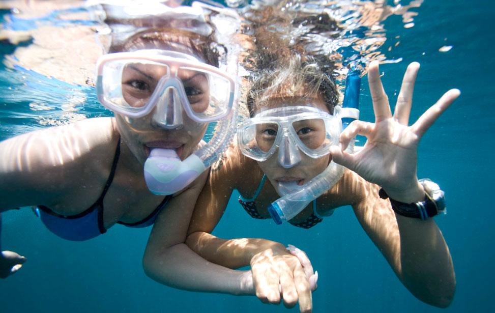 Dolphin Watch Trip:  Snorkeler/Rider